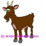 лысая коза